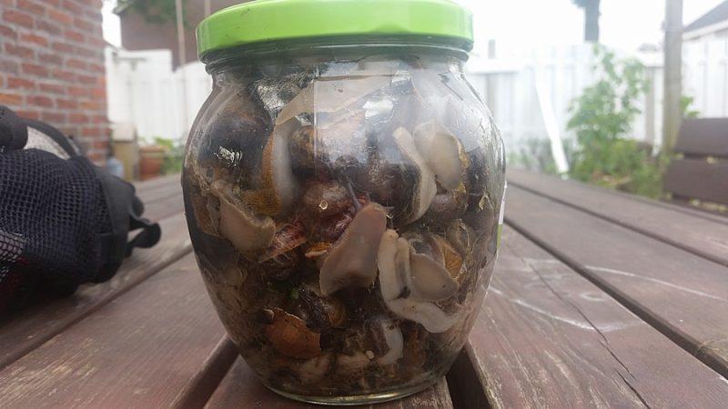 moestuin natuurlijke ongedierte bestrijding slakken