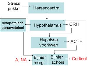 technische uitleg stress