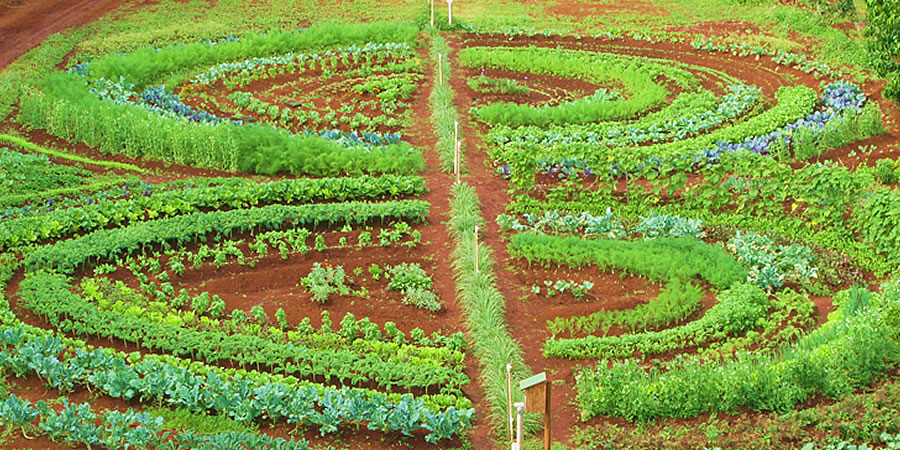 Lente eetbare tuin permacultuur