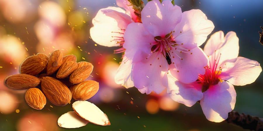 natuurlijke vitamine e gezonder